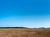 View over the reed beds at Snape in Suffolk