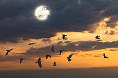 flying crows on halloween