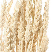 wheat branch isolated