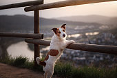 small dog is standing by the fence at sunset. Pet on the nature.