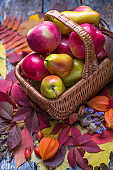 Freshly picked organic apples and pears in the basket with autumn leaves on a wooden background
