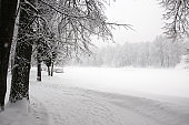 Serene winter landscape with snow covered trees in park during heavy snowfall.
