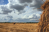 Straw bales in empty field after harvesting time on a background of dark dramatic clouds in overcast sky.