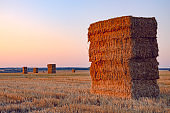 Rectangular haystacks on the empty field after harvesting illuminated by the warm light of setting sun.Tula region,Russia