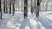 tree trunks covered with snow in the park on a sunny day