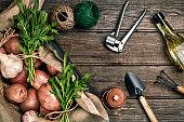 Raw potatoes in a linen bag, arugula, garlic, garden shovel and rake, food background, top view