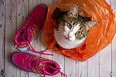 Cute cat in a plastic shopping bag with pink sport shoes. Top view