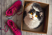 Cute cat in box with pink sport shoes. Top view