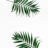Tropical palm leaves on white background. Flat lay, top view