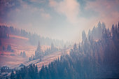 Fairy tale scenery in purple shades. Carpathians
