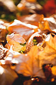 Autumn. Multicolored fallen leaves background