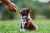A man petting a sheep dog puppy