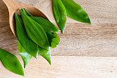 Young wild garlic (Allium ursinum) leaves on a wooden spoon