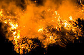 Close Up Orange Flames at Night During California Fire