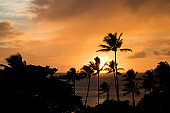 Sunset with Palm Trees in Foreground over Ocean with Orange Clouds