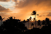 Orange Clouds at Sunset over Ocean with Palm Trees Silhouetted in Foreground