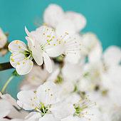 Springtime season flowers
