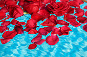 rose petals floating on pool