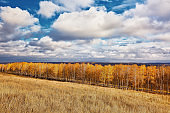 Fall season landscape with the row of birches and dramatic sky, beautiful autumn outdoor background