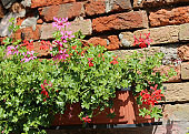 red and pink flower pot leaning on the wall of an house