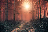Red colored foggy forest landscape