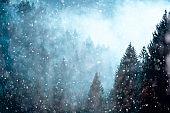 Snowfall in misty forest landscape