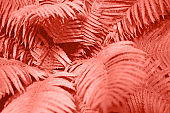 Fern leaves foliage as floral background. Color of the year 2019.