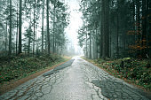 Foggy forest with cracked asphalt road
