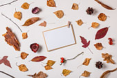 Set of autumn dry plants and paper card template