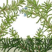 rosemary branch vector pattern