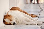 Sleeping Street Dog in Santorini Greece