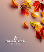 Vector Background With Autumn Leaves
