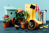 close up view of arranged rubber boots with flowers, flowerpots, gardening tools, watering can and birdhouse on wooden tabletop on blue