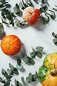 top view of autumn pumpkins and eucalyptus leaves on white background