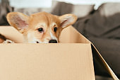 selective focus of adorable puppy sitting in cardboard box