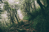 beautiful majestic trees and rocky trail in Indian Himalayas, Dharamsala, Baksu