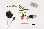 top view of arranged gardening equipment, flowerpots and green plants isolated on white