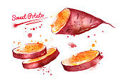 Watercolor illustration of sweet potato
