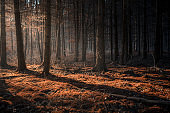 Dark autumn forest with beams of light