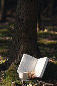 Book and morning coffee at a tree root
