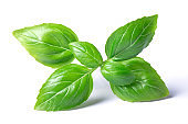 basil herb leaves
