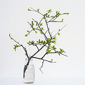 pretty branch in a glass vase. isolated white background