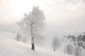 Amazingly beautiful winter landscape of snow covered trees
