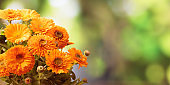 Calendula bouquet closeup, blur nature background, copy space, banner