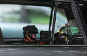 Three puppies alone in a car