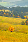 Landscape with a trees in autumn colors.