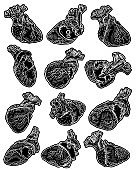 Set of Valentine's day anatomical human hearts. Print on t shirts concept. Sticker, pin or patch. flesh tattoo hand drawing idea. Vector.