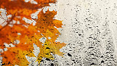 Multicolor maple leaves through the window glass filled with rain. Texture of water in heavy rain