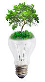 light bulb with green tree isolated on white