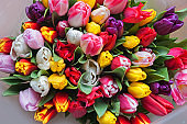 tulips flowers bouquet from above